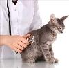 Ветеринарные клиники в Барде
